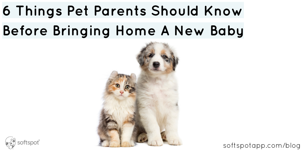 6 Things Pet Parents Should Know Before Bringing Home A New Baby