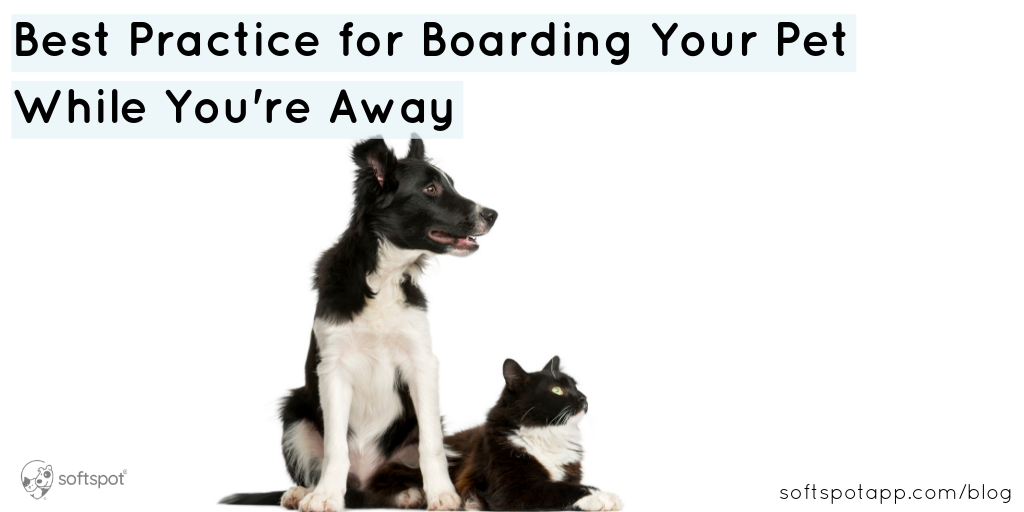 Best Practices For Boarding Your Pet While You're Away