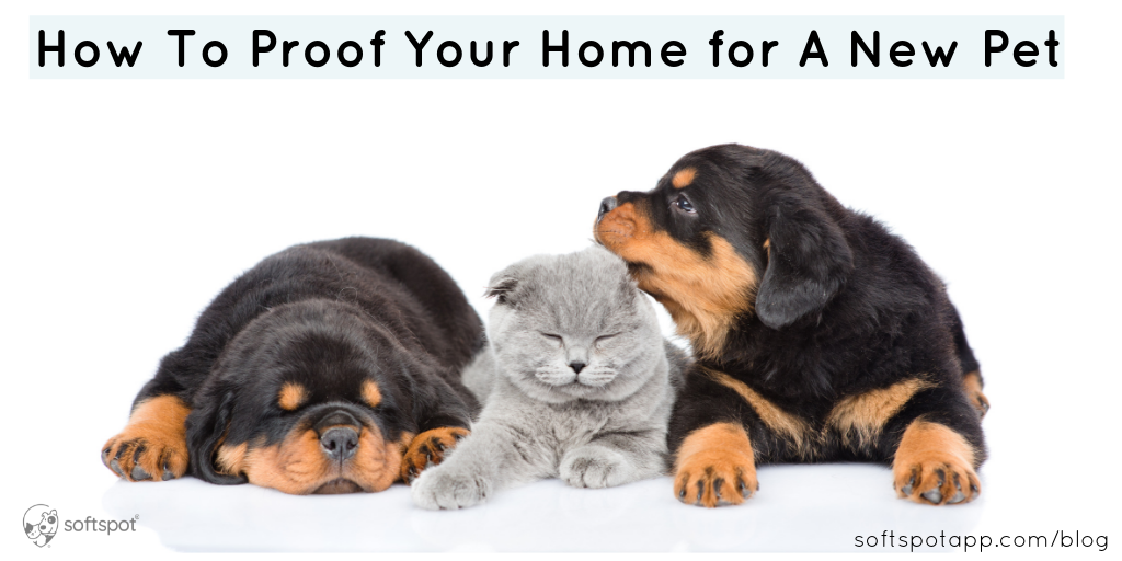How To Proof Your Home For A New Pet