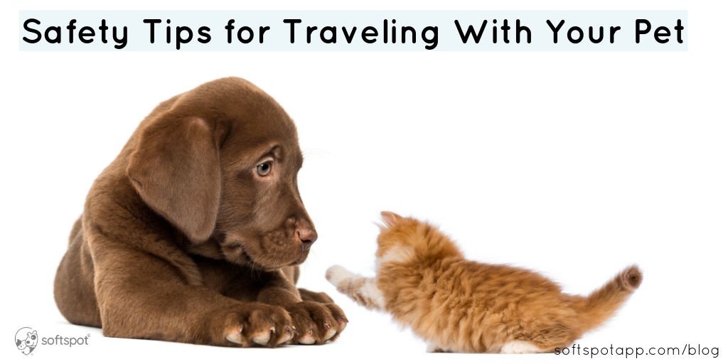 Safety Tips For Traveling With Your Pet
