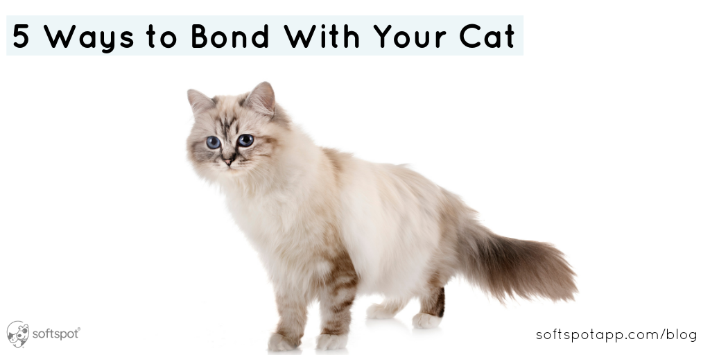 5 Ways To Bond With Your Cat