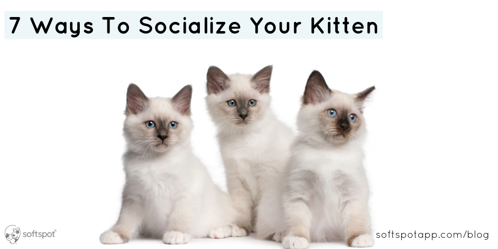 7 Ways To Socialize Your Kitten